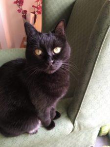 Hastings cat behaviour testimonial
