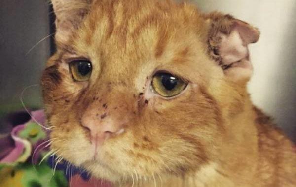 saddest cat finally gets a home