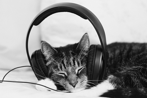 Music For Cats David Teie interview