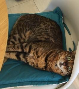 cat behaviourist Essex