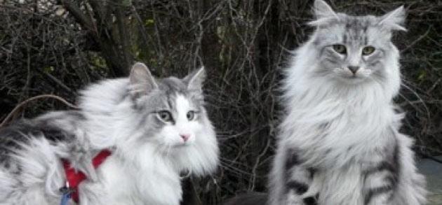 MULTI-CAT-HOUSEHOLDS