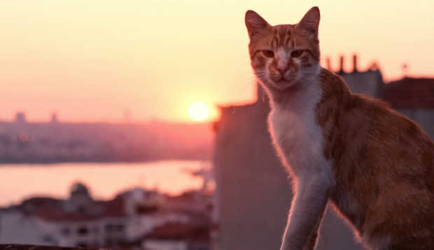 Kedi film review