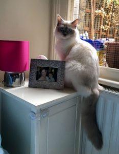 East London cat behaviour consultation