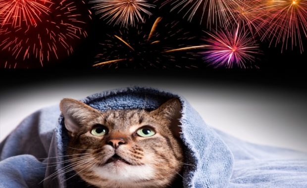 seeing firework night from a cats perspective