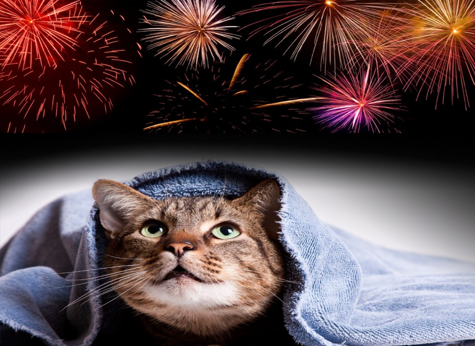 cats and fireworks