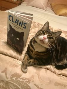Claws Confessions Of A Cat Groomer Uk
