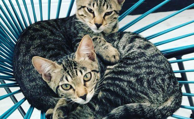 North London cat behaviourist