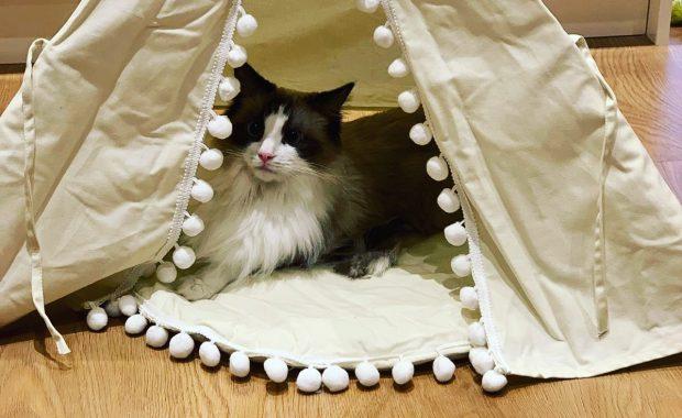 cat behaviour London home visit veterinary feedback