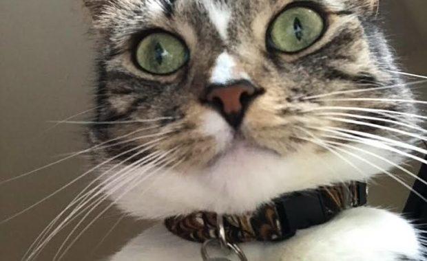 Chelsea cat behaviourist