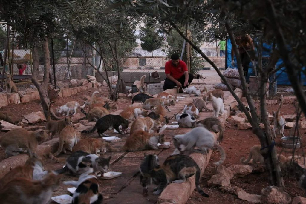 interview with The Cat Man Of Aleppo. Mohammed Alaa al-Jaleel