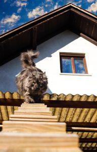 anita kelsey cat behaviourist london uk