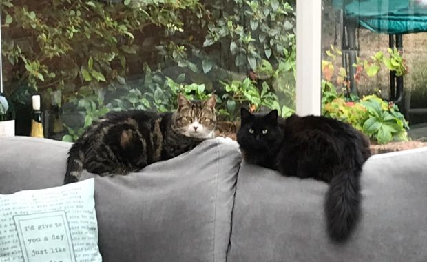 help with domesticating feral cats