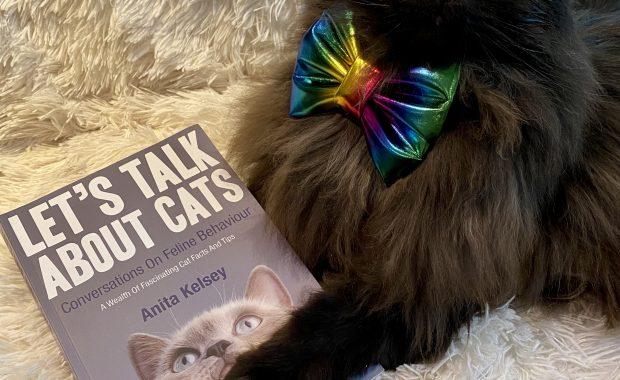 zoom book launch let's talk about cats by Anita Kelsey