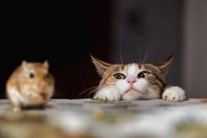 the problems with giving tinned tuna to cats as their daily food