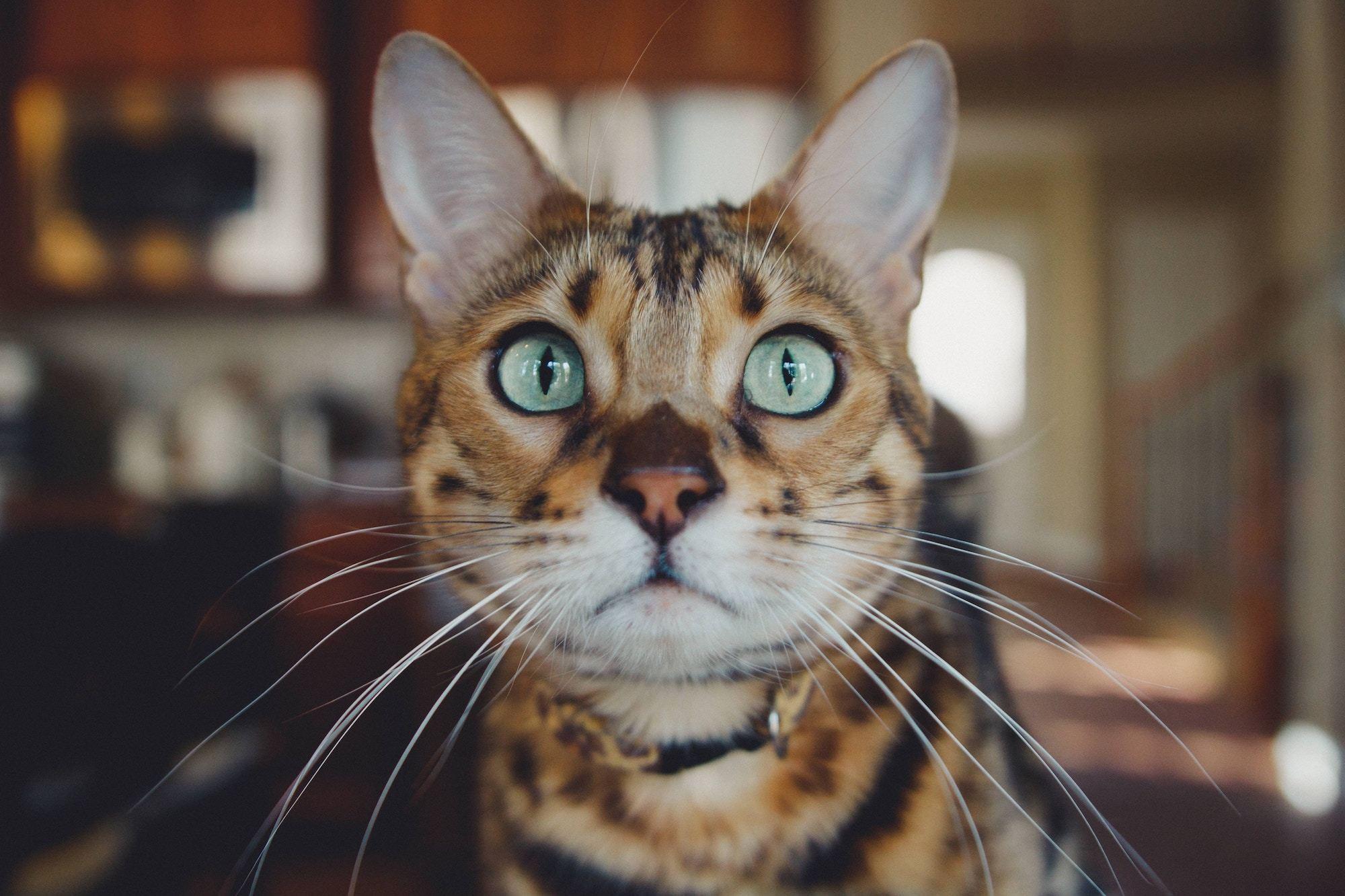 zoom cat behaviour advice