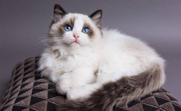 the London cat behaviourist